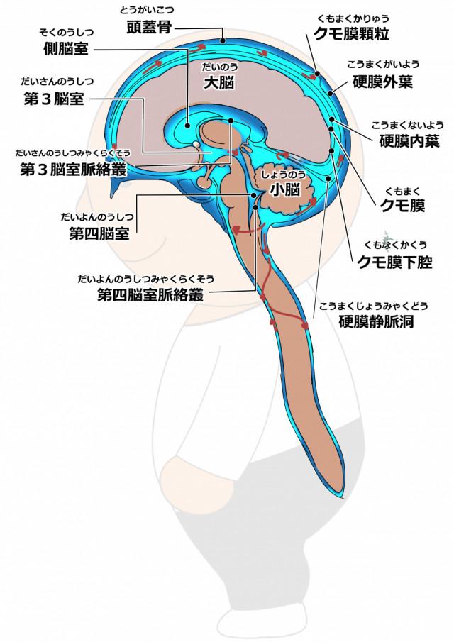 脳脊髄液とは